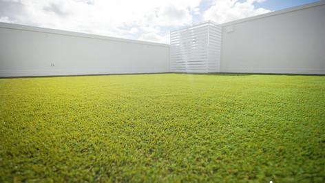 grass on rooftop.jpg