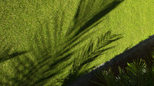 synthetic grass shadow.jpg