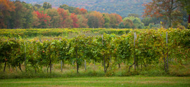contact-priam-vineyards.jpg