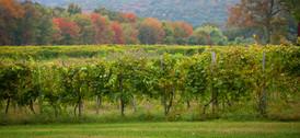 contact-priam-vineyards.jpg