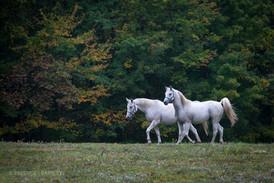 horses-at-priam-vineyards.jpg