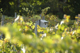 bluebird-vineyard-habitat.jpg