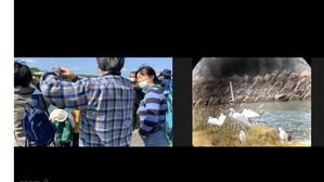 クロツラヘラサギ観察会in今津に参加しました!
