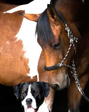 Maren Altekruse Behandlung Pferde und Hunde
