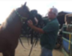 Harness a horse screen shot