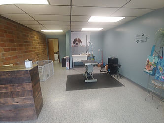 All Creatures Pet Salon