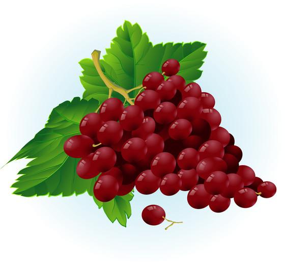 Sermon: Bearing Fruit