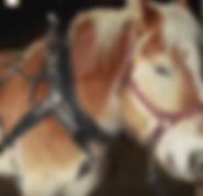 Draft Horse screen shot_edited.jpg