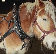 Draft Horse screen shot_edited.jpg