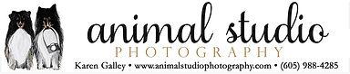 AnimalStudioPhotography.jpg