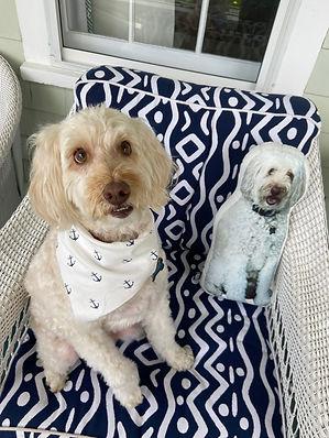 Bentley and Pillow.jpg