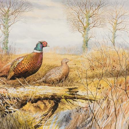 Pheasants at Spirthill