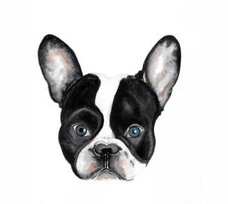 Doggy Portrait by Jill Chong
