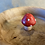 Thumbnail: Anni & John Collab - Maple wood catch-all bowl with mushroom detail