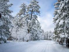 Munds Park Winter Wonderland