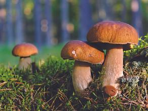 Sustainable Mushroom Hunting & etiquette