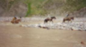 19 A mula en el rio Tunuyan.JPG
