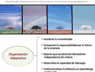 Cualidades de una organización adaptativa.