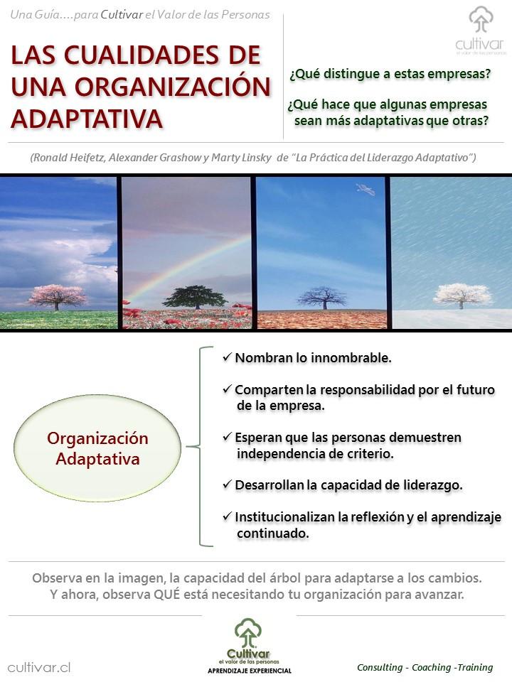 Cualidades de una organización adaptativa