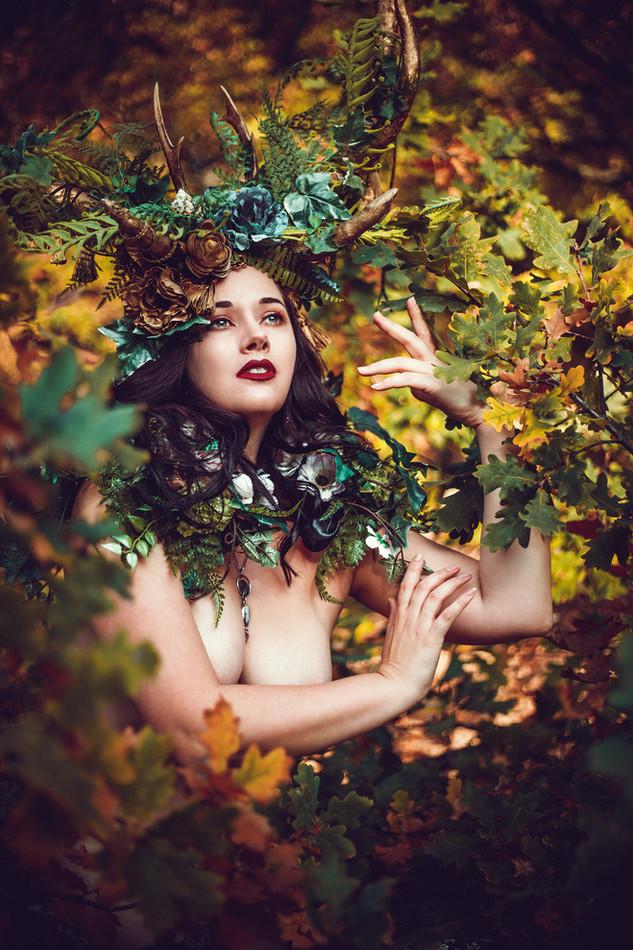 Zauber des Waldes