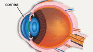 Cornea ( per eye)