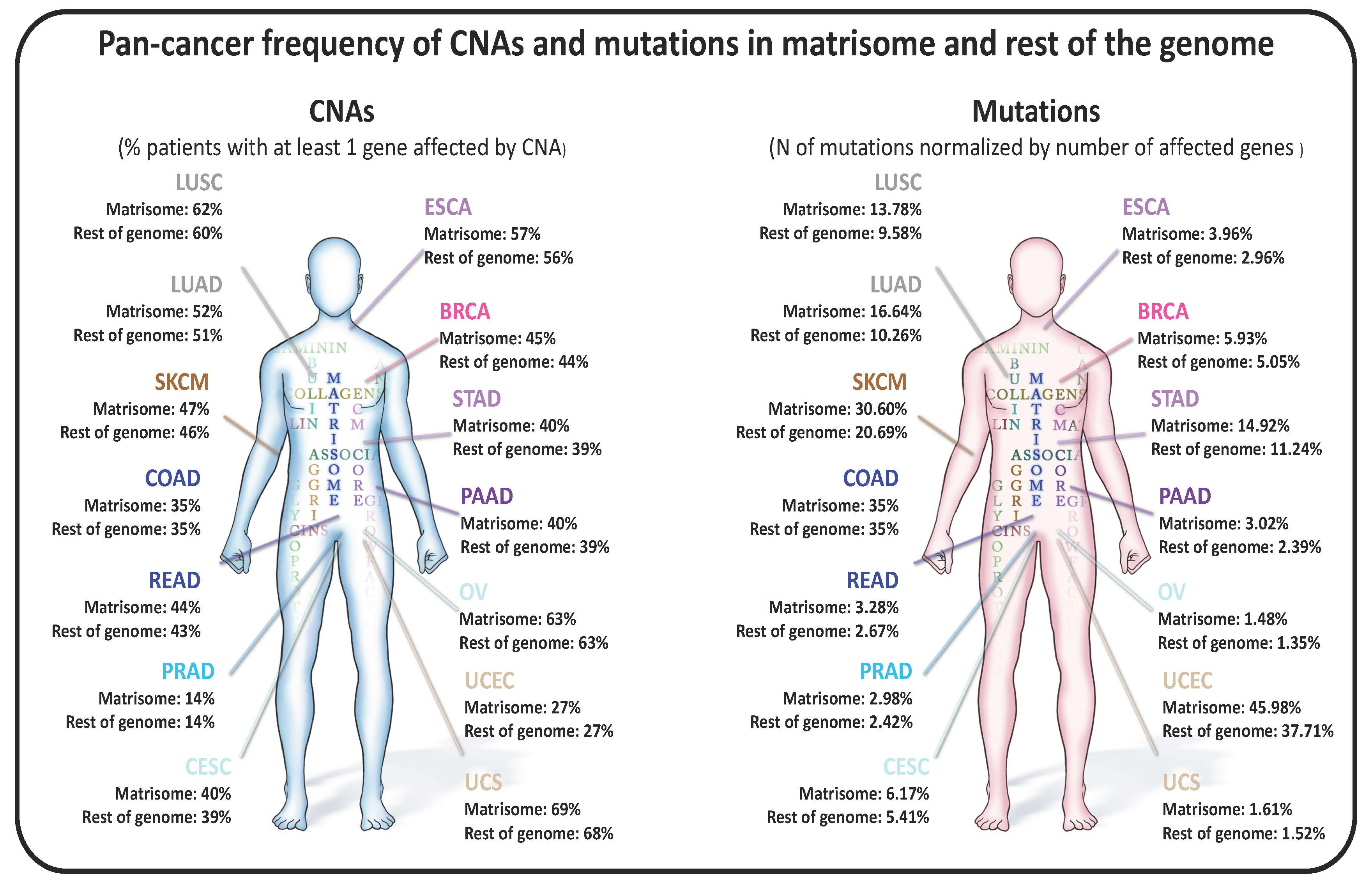Pan-Cancer Analysis of the Genomic Alterations and Mutations of the Matrisome