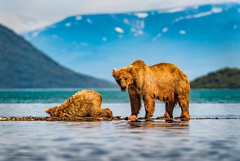 Mama Bear Feed me too good