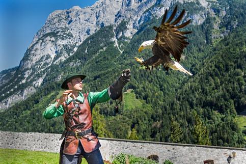 Bald Eagle , Austria