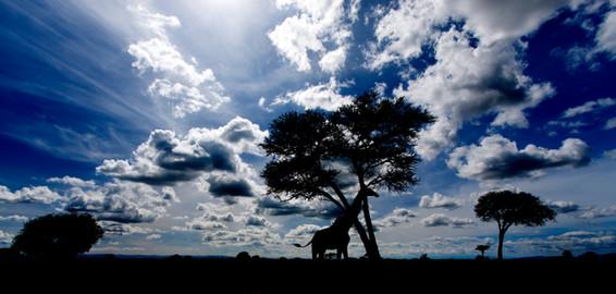 Serengety , Tanzania