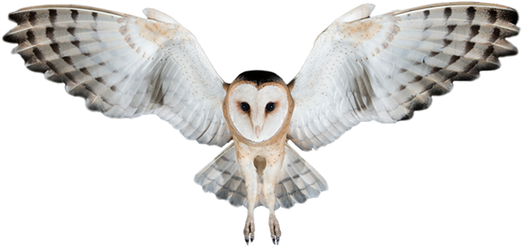 35-358114_ever-since-then-owl-has-been-o