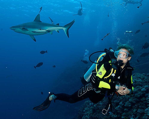케언즈 5일 리브어보드 Coral Sea Dive Adventure