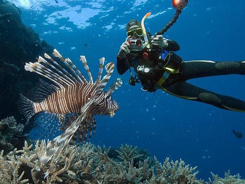 케언즈 4일 오픈워터코스 Island and Reef