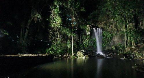 골드코스트 글로우웜 야간 반나절 투어