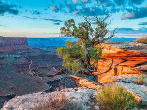 Juniper Tree, Canyonland NP