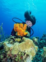 Tube Coral, Grand Cayman