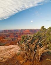 Juniper Tree, Dead Horse Point