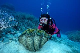 Giant Clam, Palau