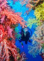 Soft Coral, Fujikawa Maru, Truk Lagoon