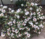 Christine's Spring garden 1.jpg
