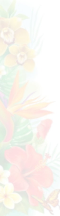 flower%25252520frame_edited_edited_edite