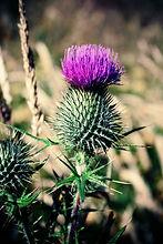 scotland-1531358_1280.jpg