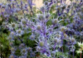flower-1839457_1280.jpg