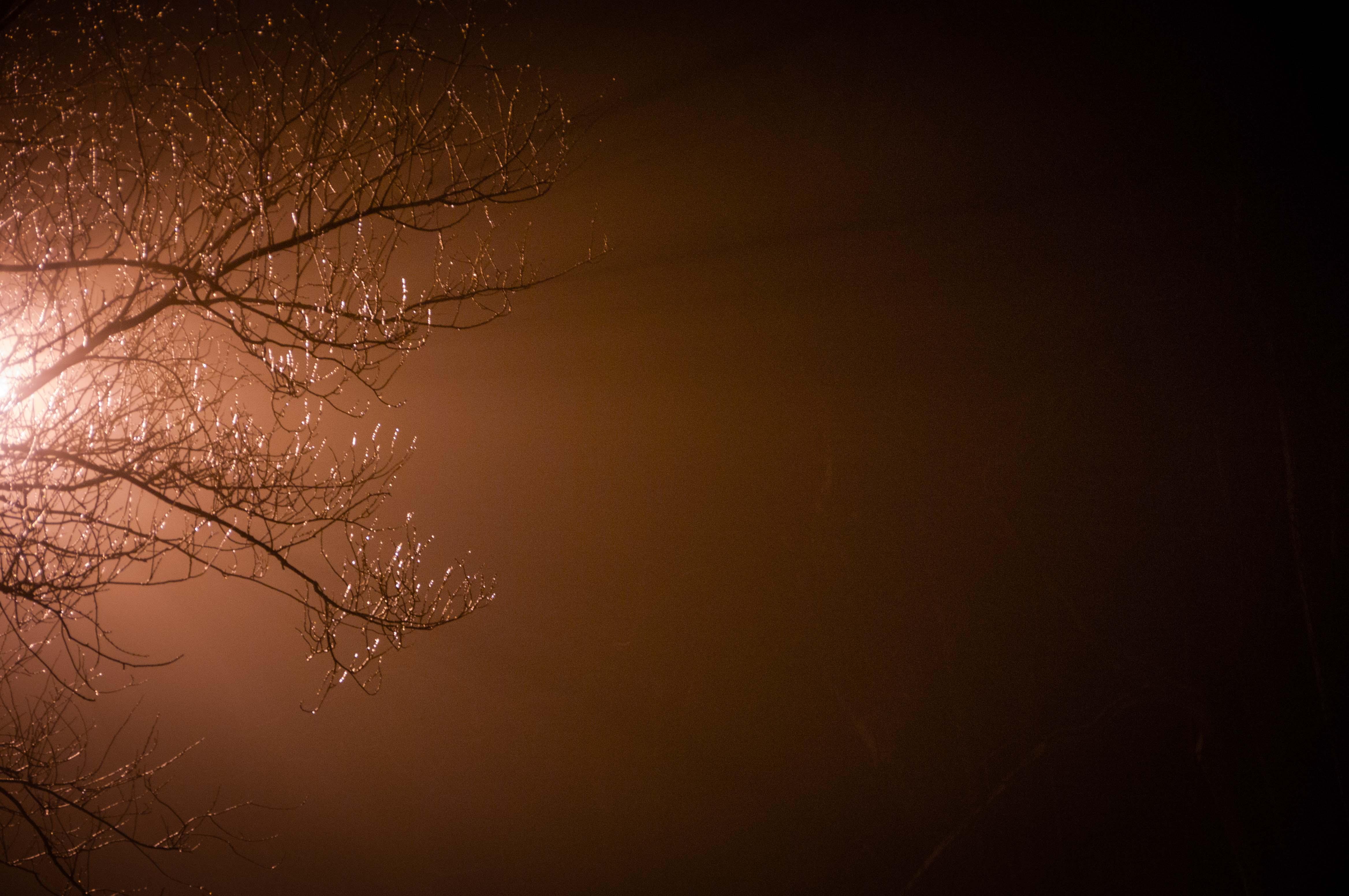 2017-02-15 myPhotos_002