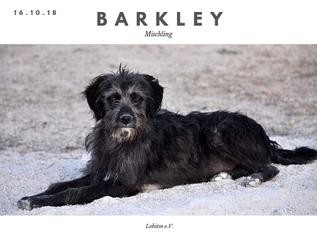 Mehr zu Barkley hier...