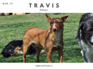 Travis.png