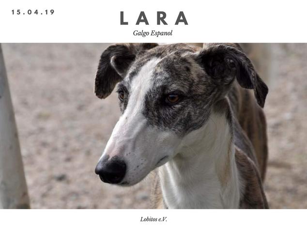 Lara.png