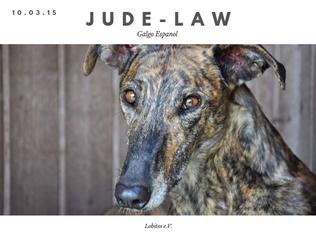 Mehr zu Jude-Law hier...