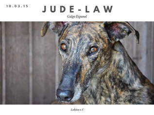 jude law.png