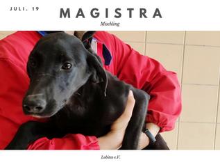 Magistra.png
