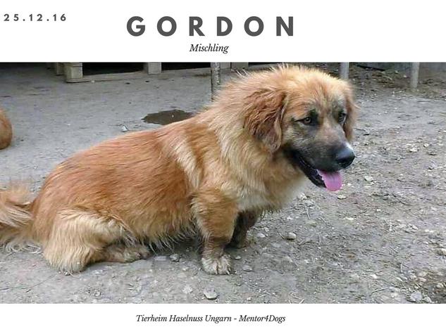 Gordon.png